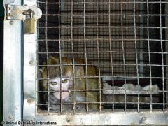 Primate abuse in Korea