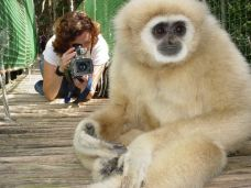 Lar Gibbon on the Monkeyland bridge